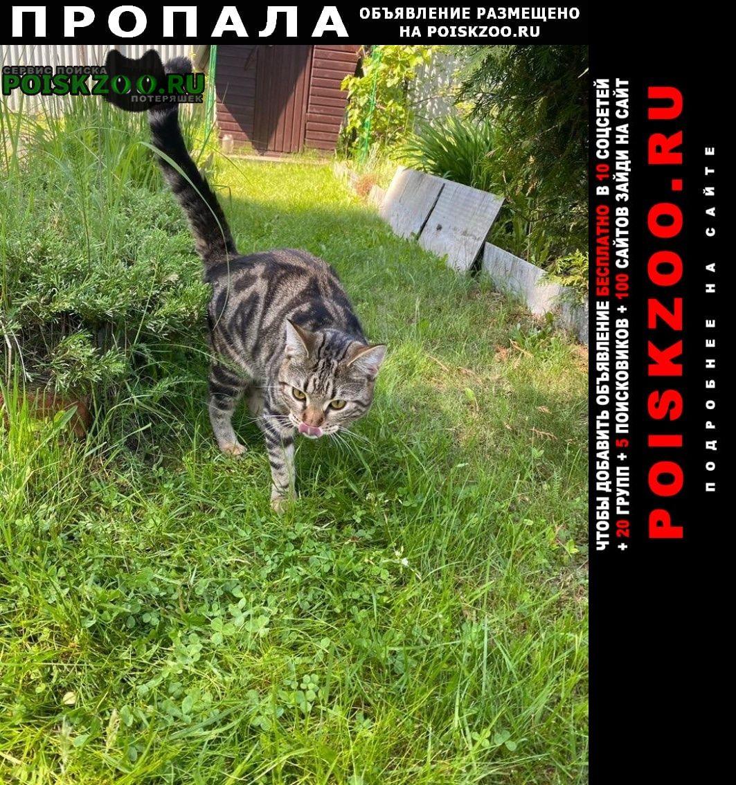 Пропал кот финик Электрогорск