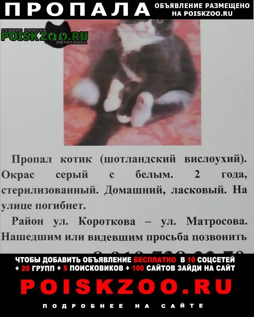 Пропал кот помогите Ставрополь