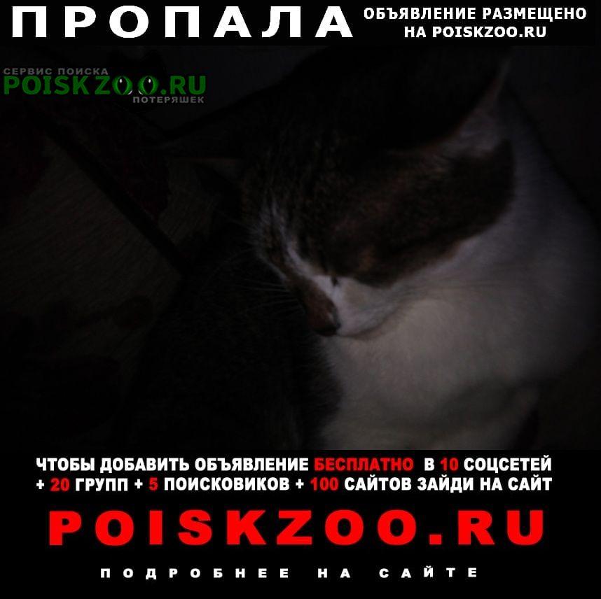 Пропала кошка Нурлат