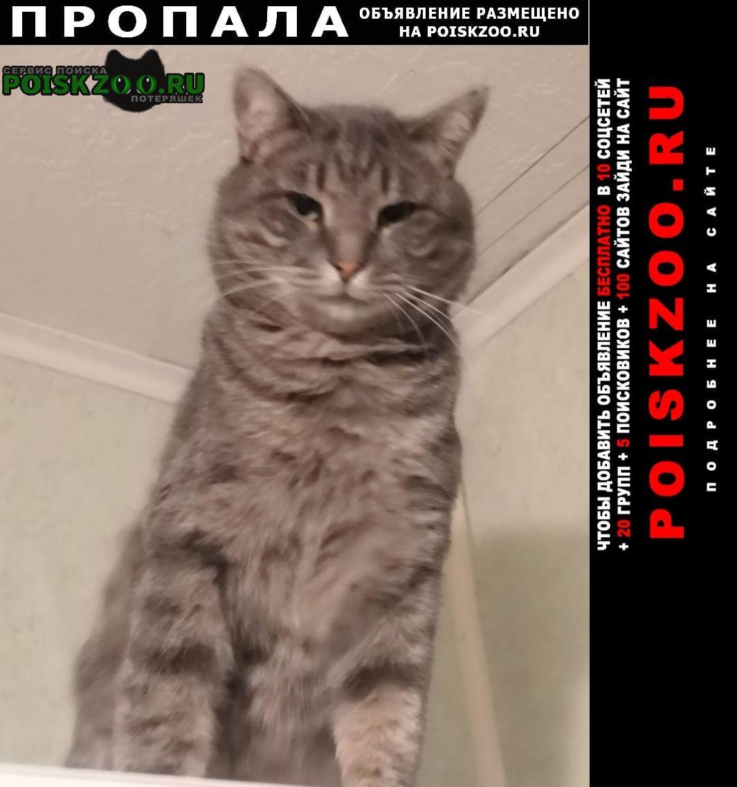 Пропал кот большой серый Старый Оскол