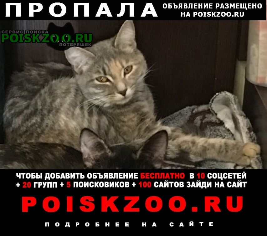 Пропала кошка пуша Жуковский