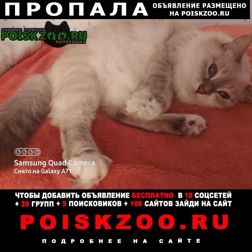Пропала кошка Чебоксары