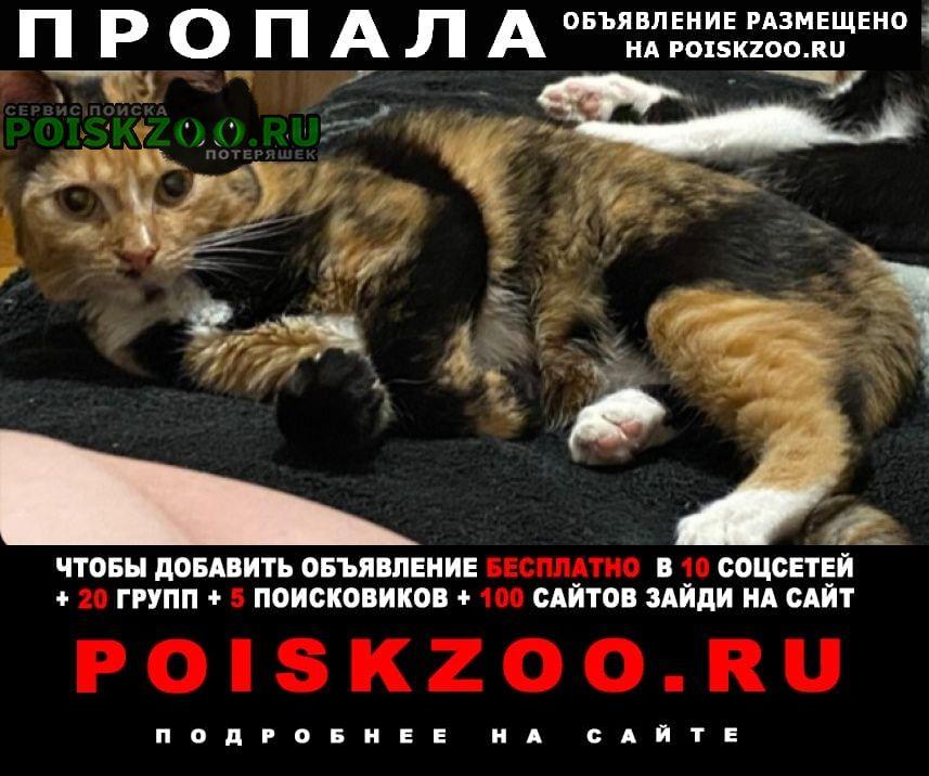 Пропала кошка Киев