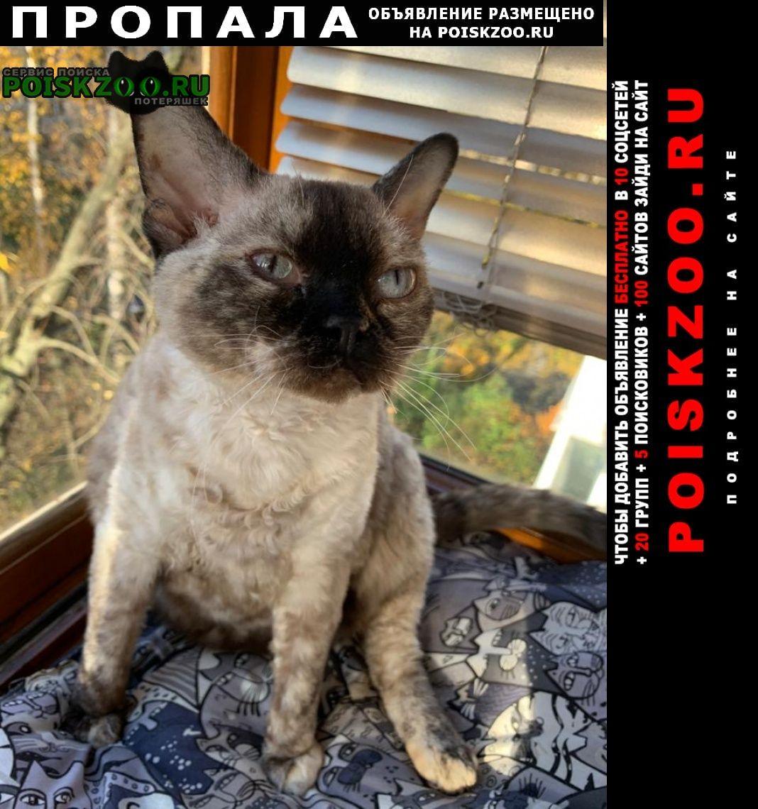 Пропала кошка в в летнем котедже несси Сестрорецк