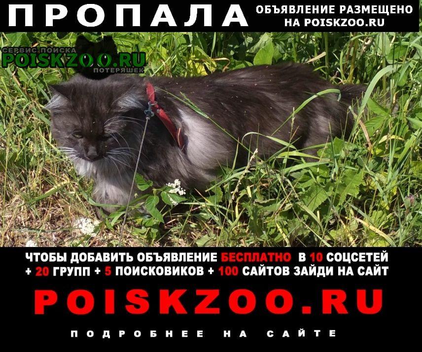 Пропал кот помогите убежал в лес с трассы Подпорожье