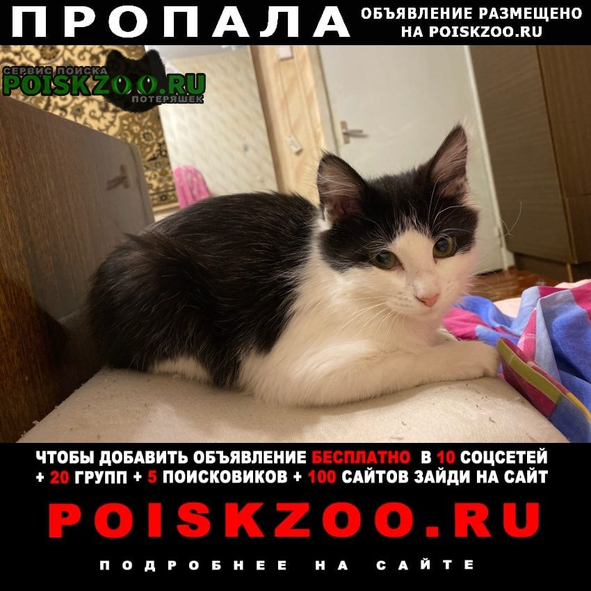 Пропала кошка помогите найти Санкт-Петербург