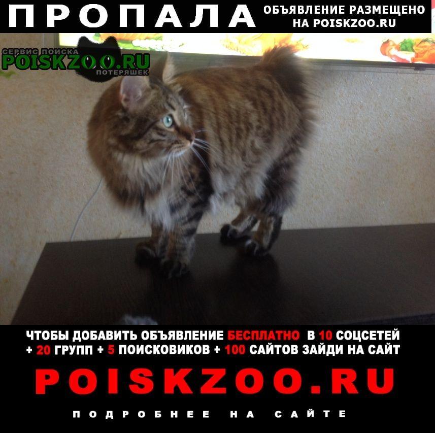 Пропала кошка алиса без хвостика Волгоград