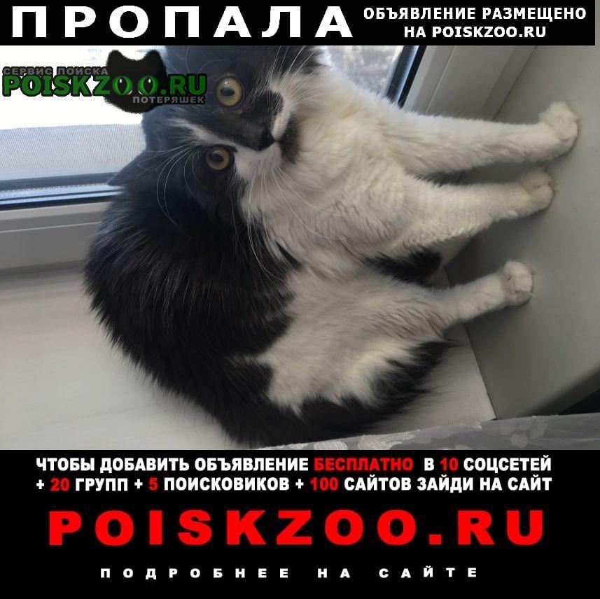 Пропала кошка Реутов