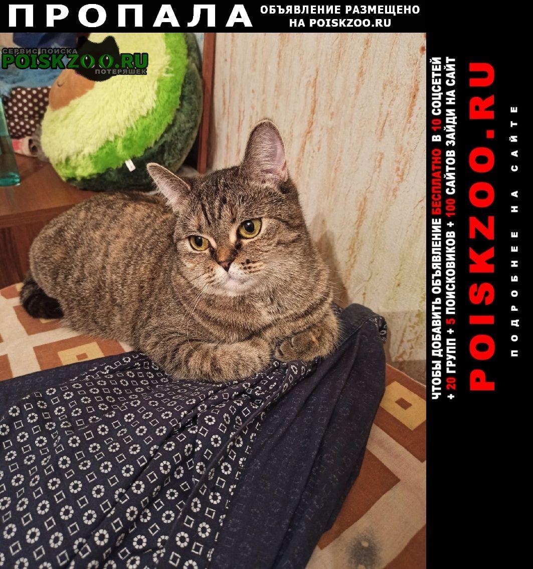 Пропала кошка потерялась Москва