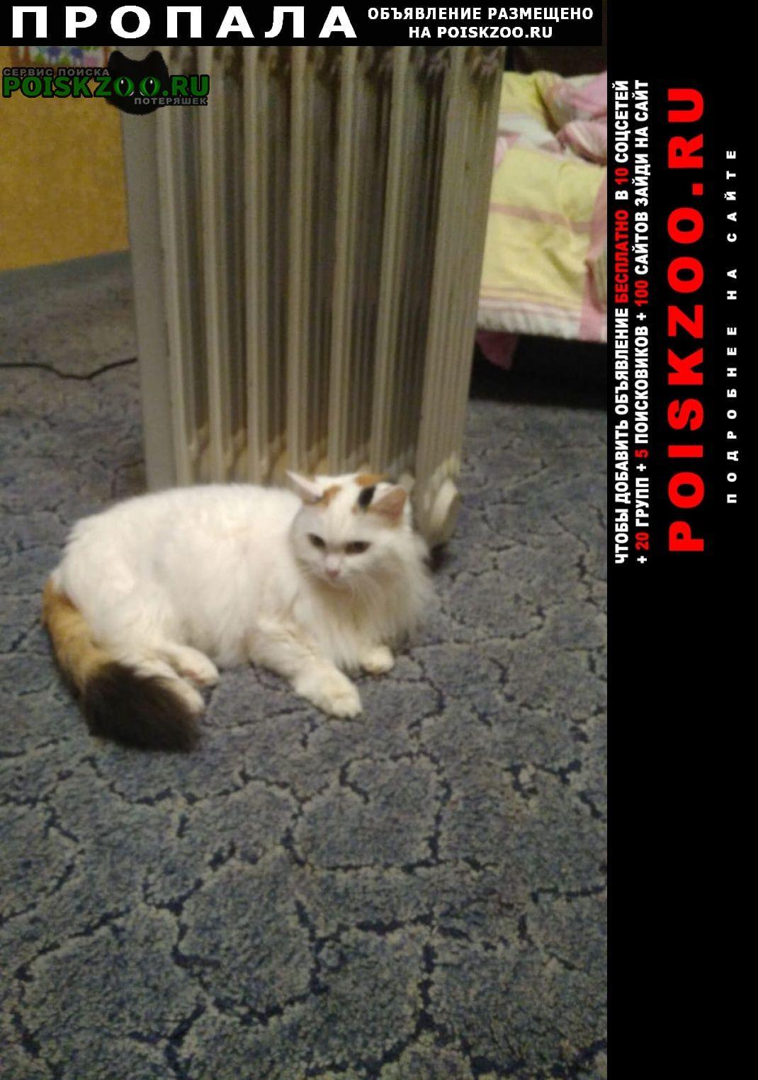 Пропала кошка Стерлитамак