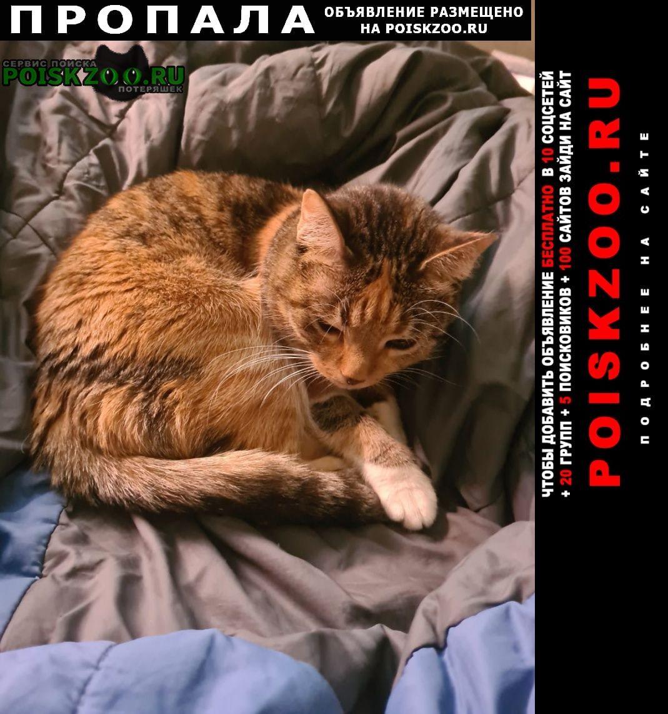 Пропала кошка Черноголовка