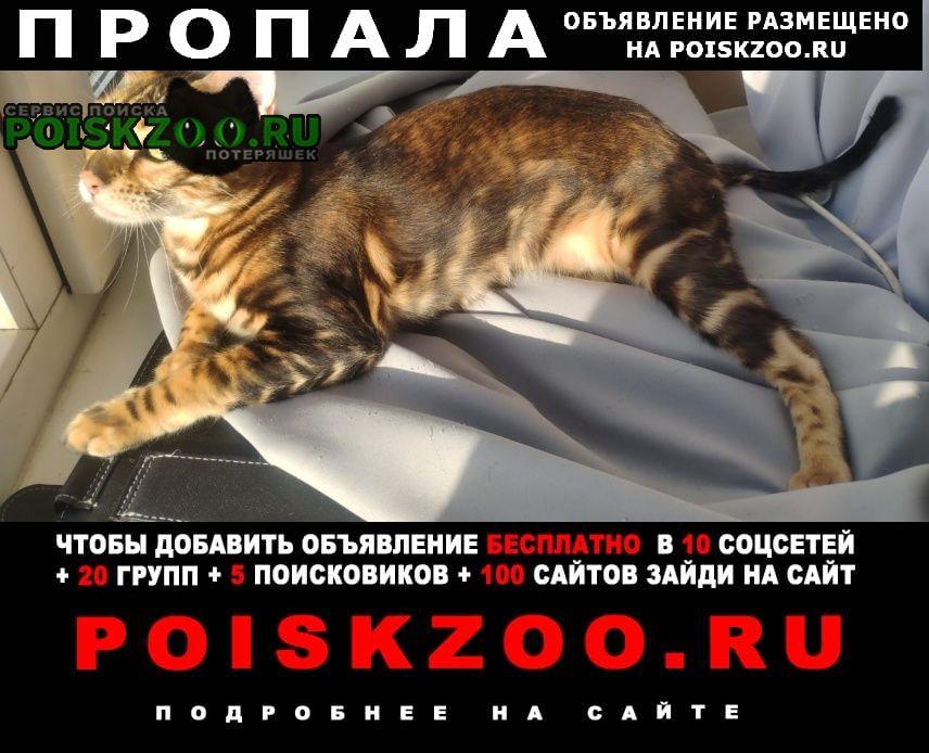 Пропала кошка выпала из окна Санкт-Петербург