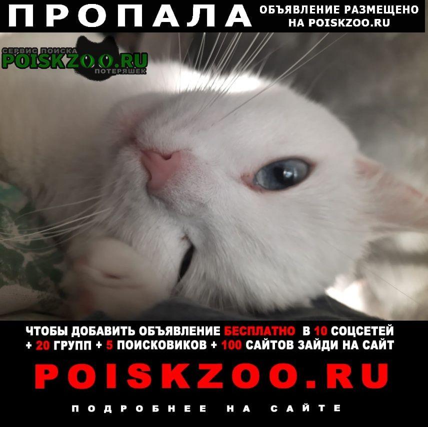 Пропала кошка вознаграждение гарантируем Люберцы