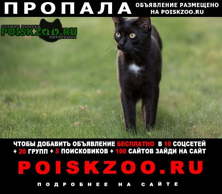 Пропала кошка нашедшему вознаграждение Брянск