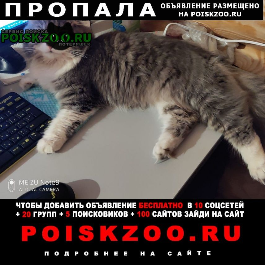 Пропал кот серый с белым Тамбов