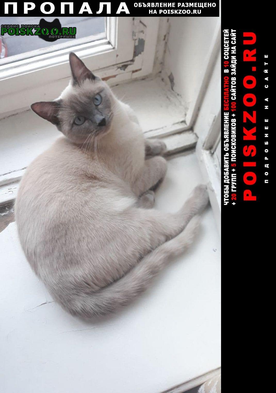 Пропала кошка вознаграждение гарантировано Санкт-Петербург