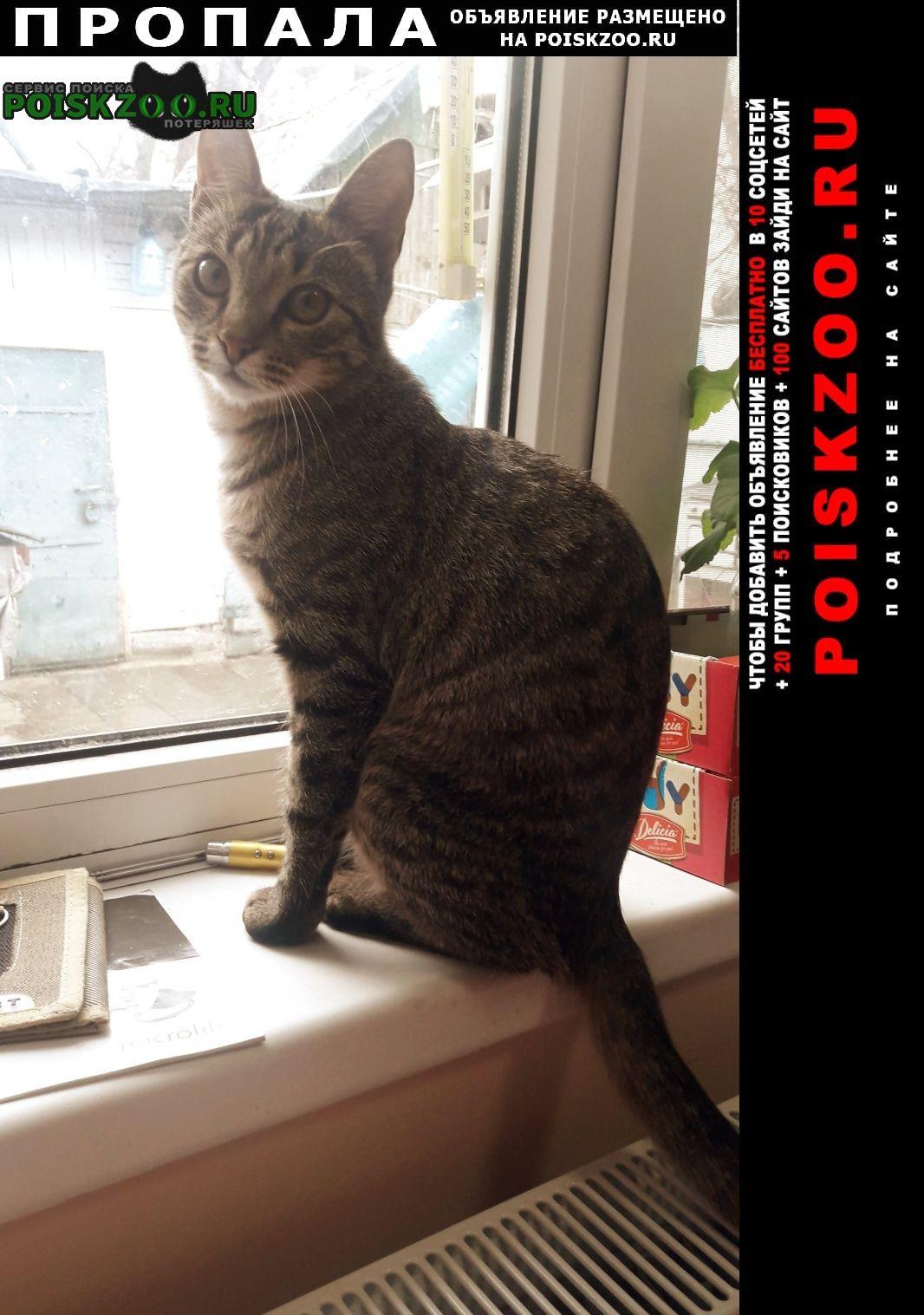 Пропала кошка тигрового окраса, айва Черкассы