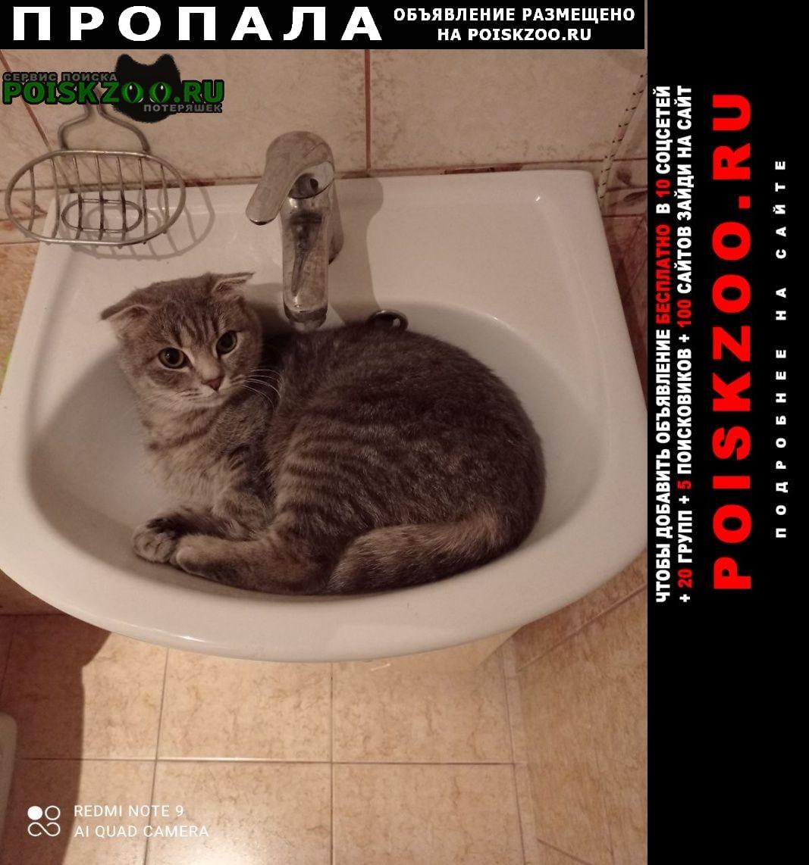 Пропала кошка не большого размера Самара