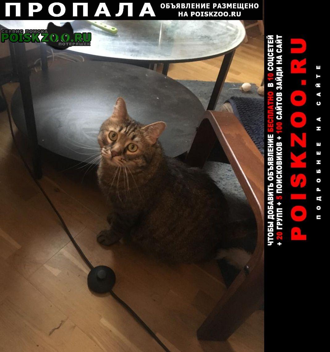 Пропал кот Химки
