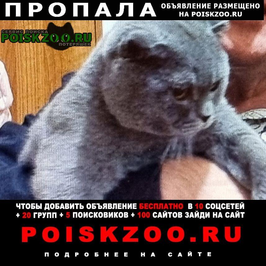 Пропал кот оскар Севастополь