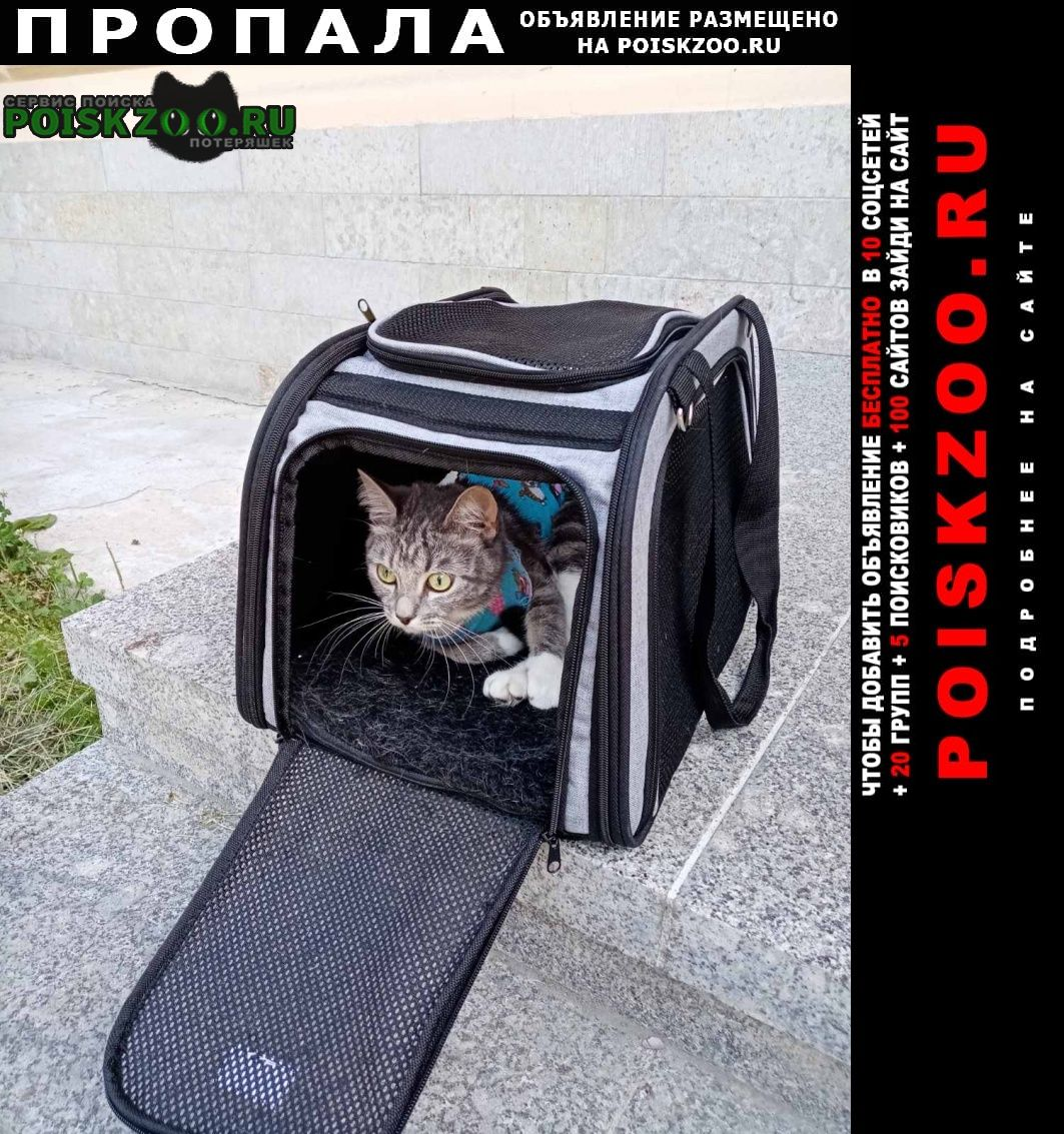 Пропала кошка помогите найти нашу девочку Санкт-Петербург