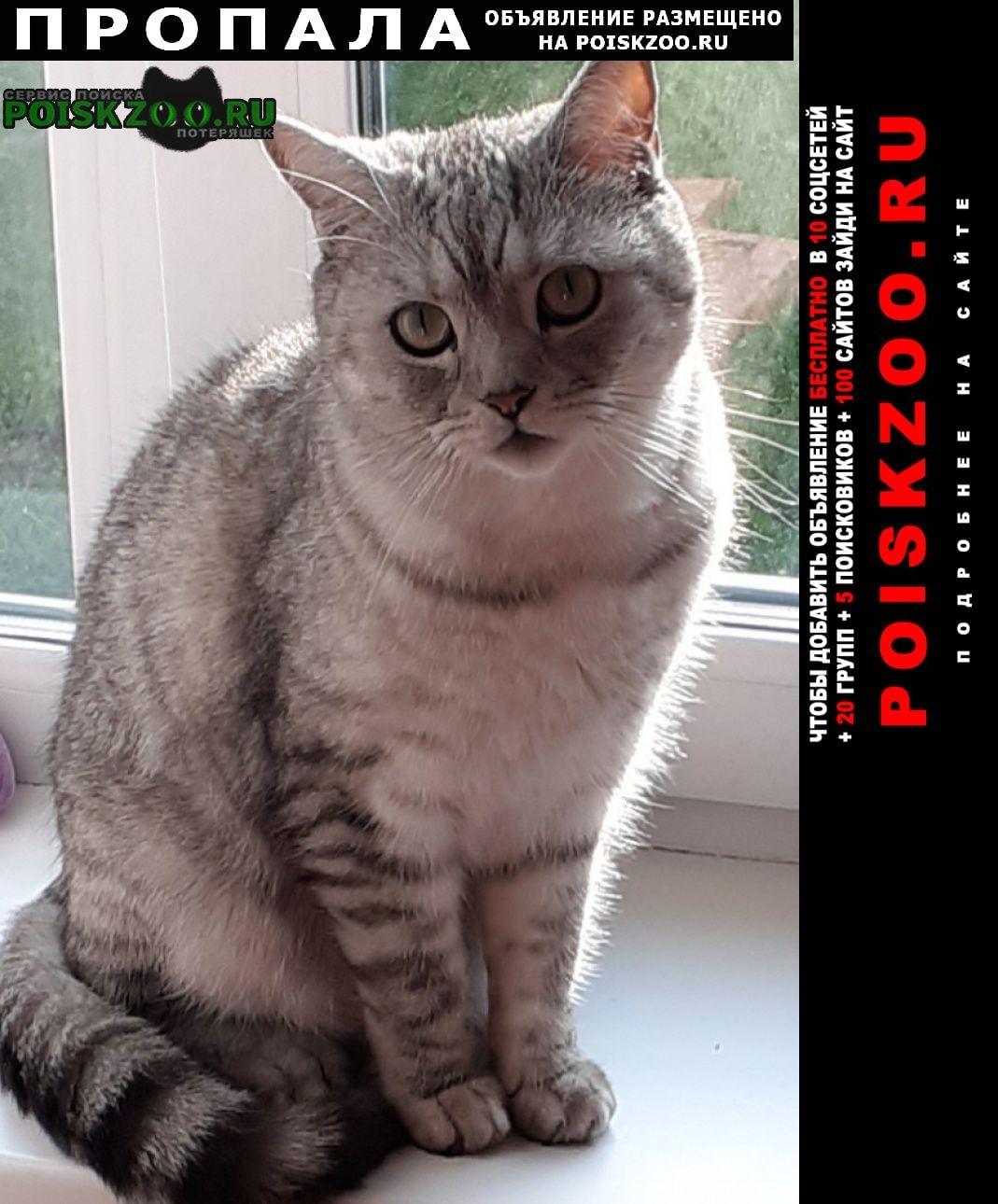 Пропала кошка кот Крапивинский