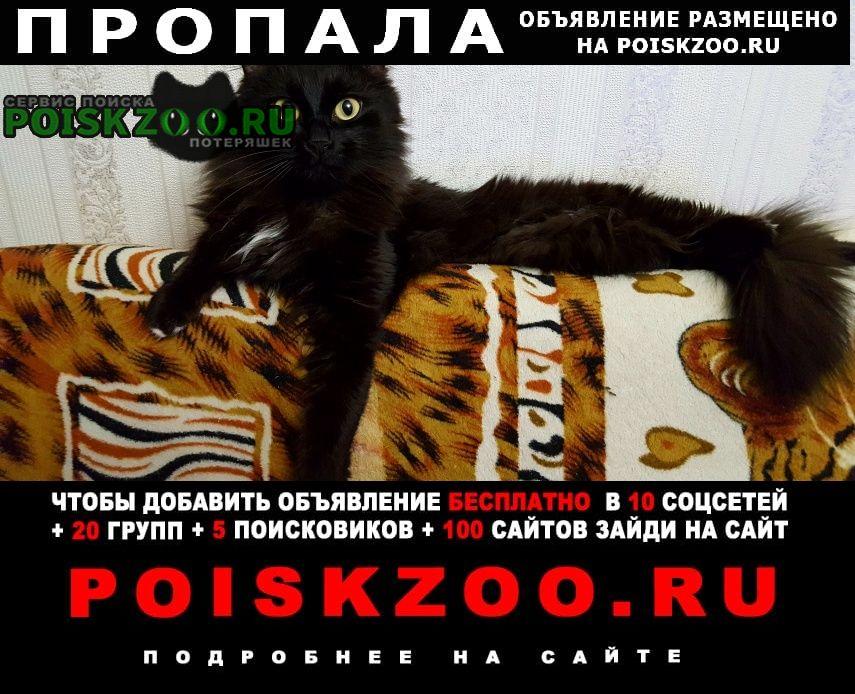 Пропал кот помогите ику вернуться домой Красноармейск (Московская обл.)
