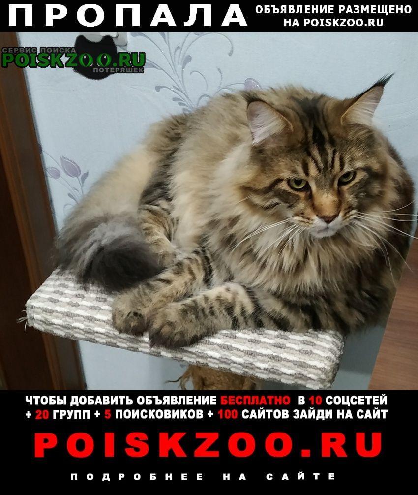Пропал кот 8 июля Муром