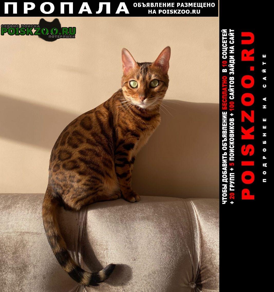 Пропала кошка Красково