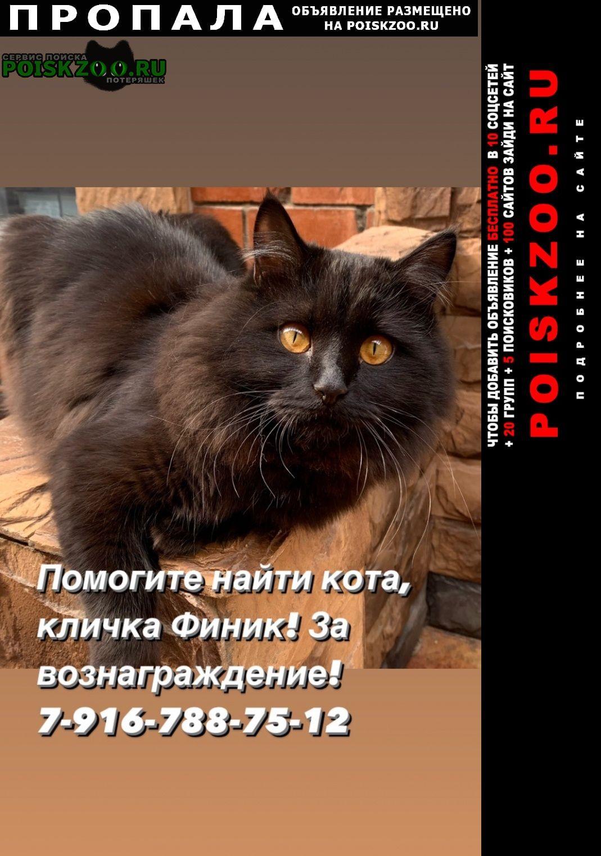 Пропал кот чёрный Мытищи