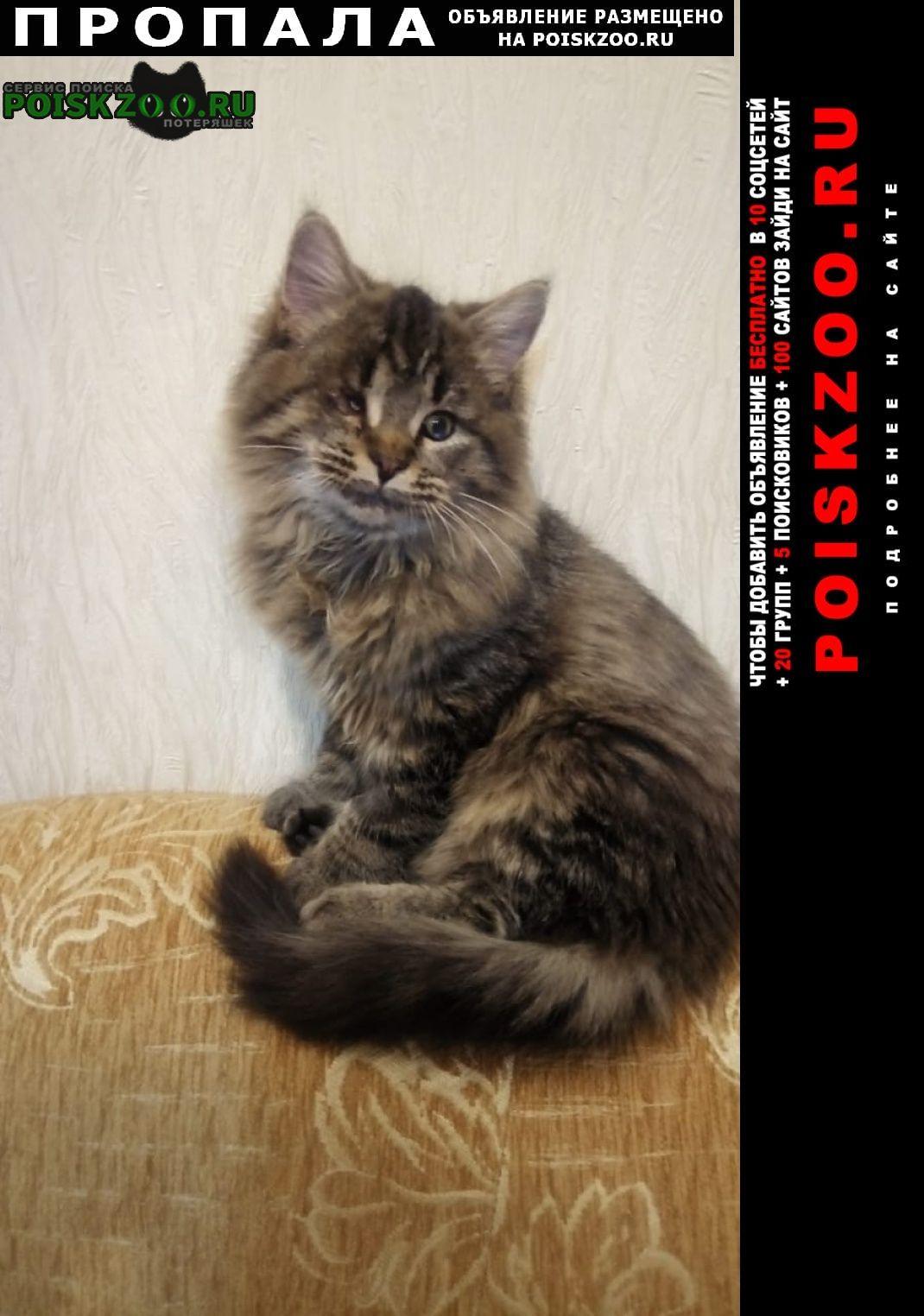 Пропал кот у клиники бегемот Егорьевск