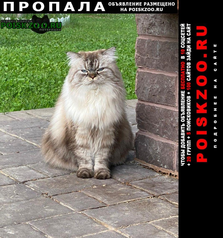 Пропал кот петрово-григорово 26 Руза
