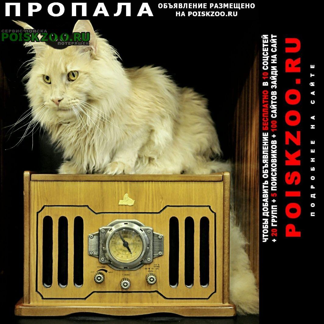 Пропал кот мейн кун Видное