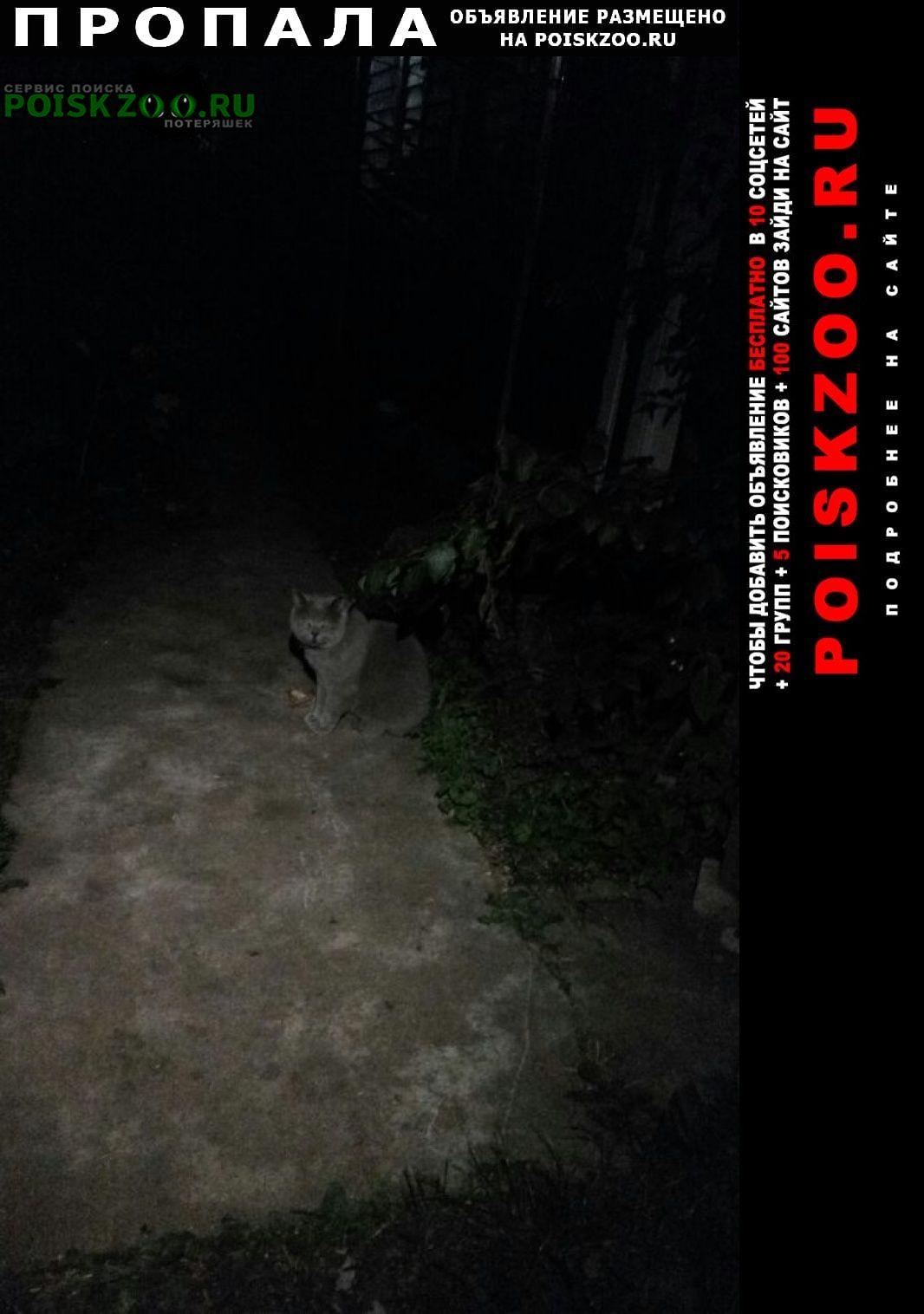 Пропал кот д. павловское британец серый Домодедово