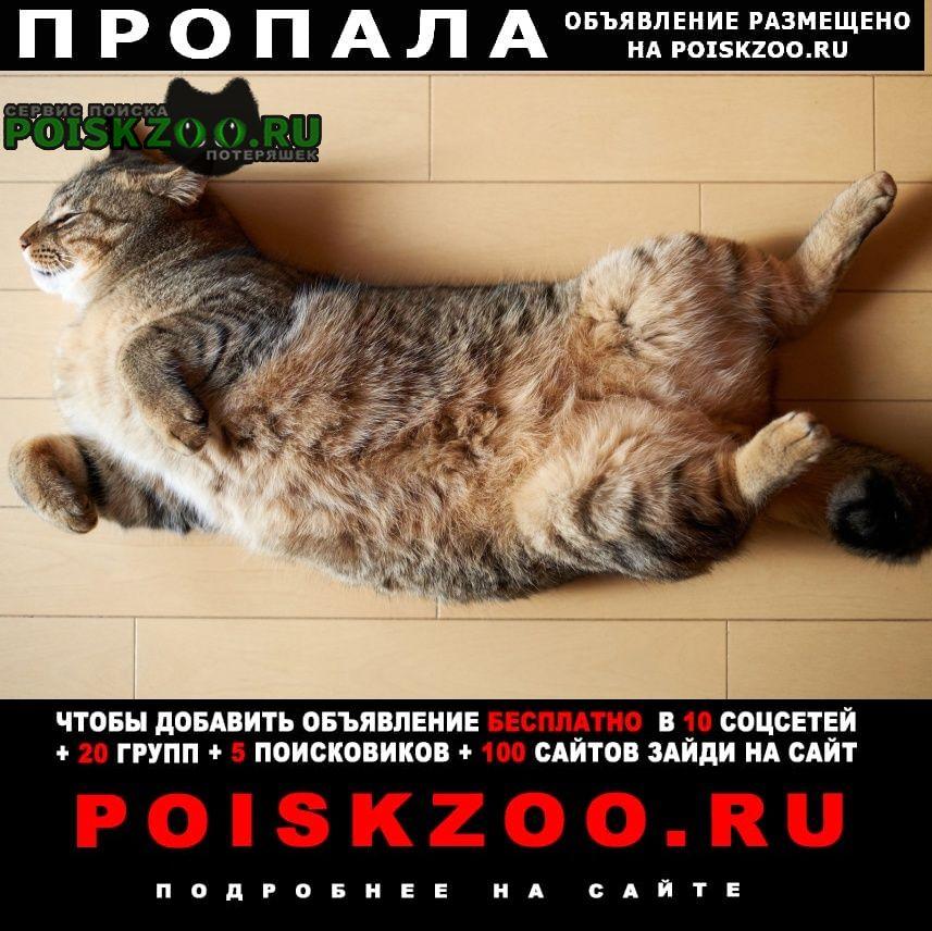 Пропал кот Сыктывкар