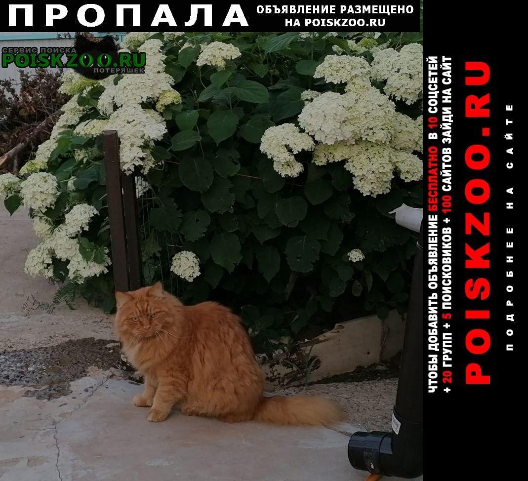 Пропал кот помогите найти Москва