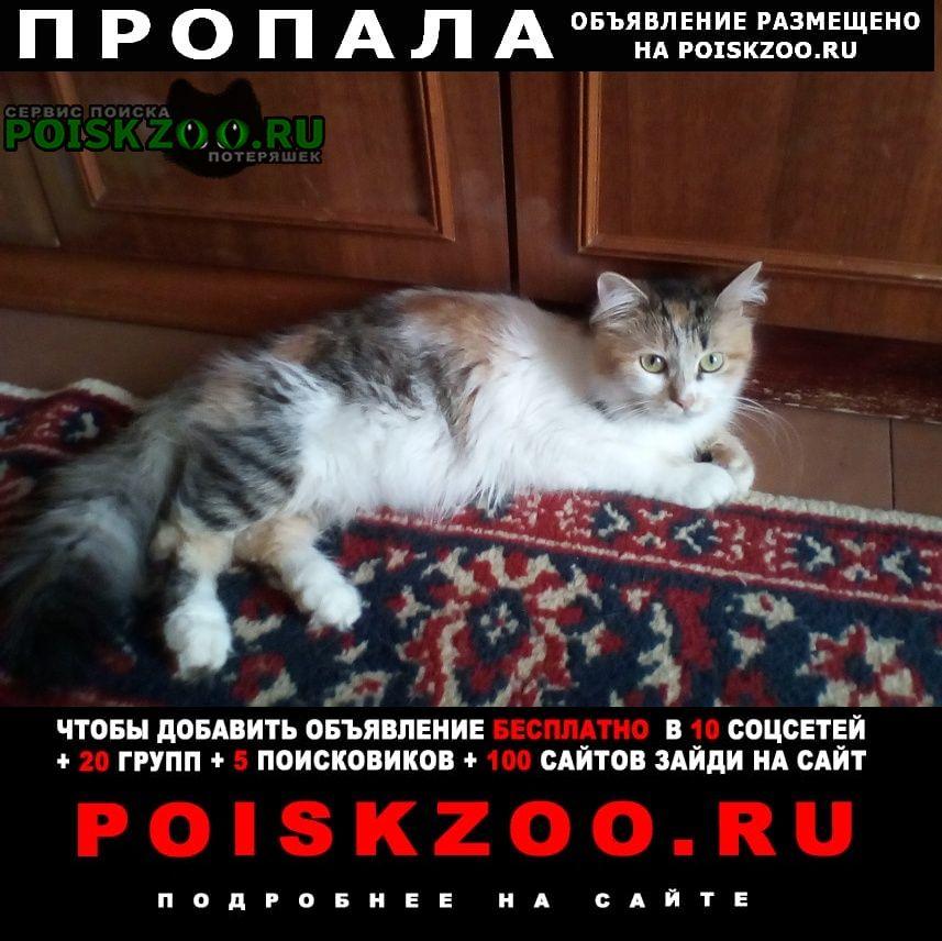 Пропала кошка трехцветная кошечка 2-х лет Харьков