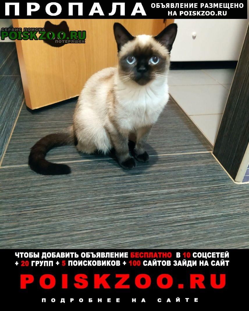 Пропала кошка сиамская кошечка Санкт-Петербург