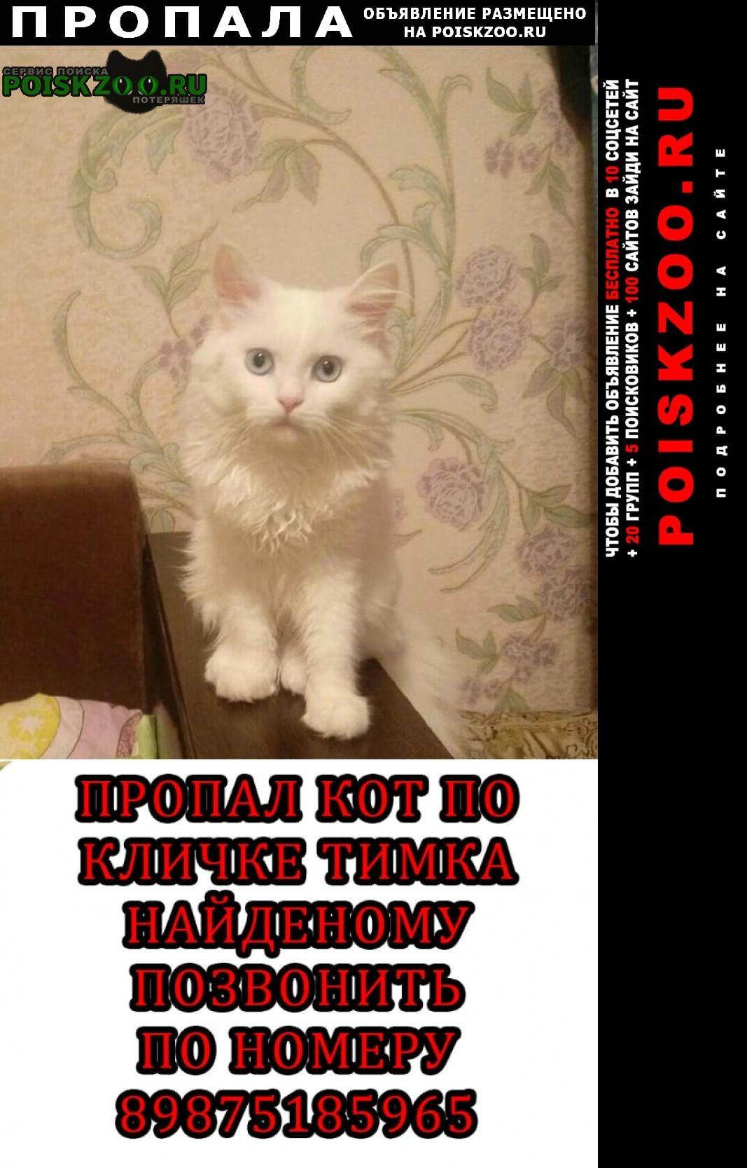 Пропал кот белый тим Пенза