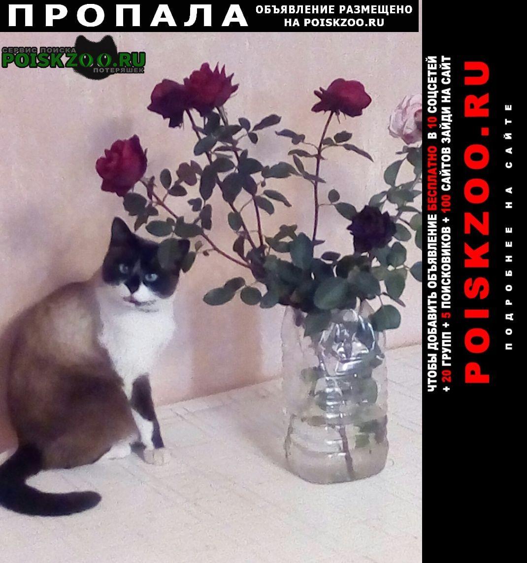 Пропал кот в подгорном Подгоренский