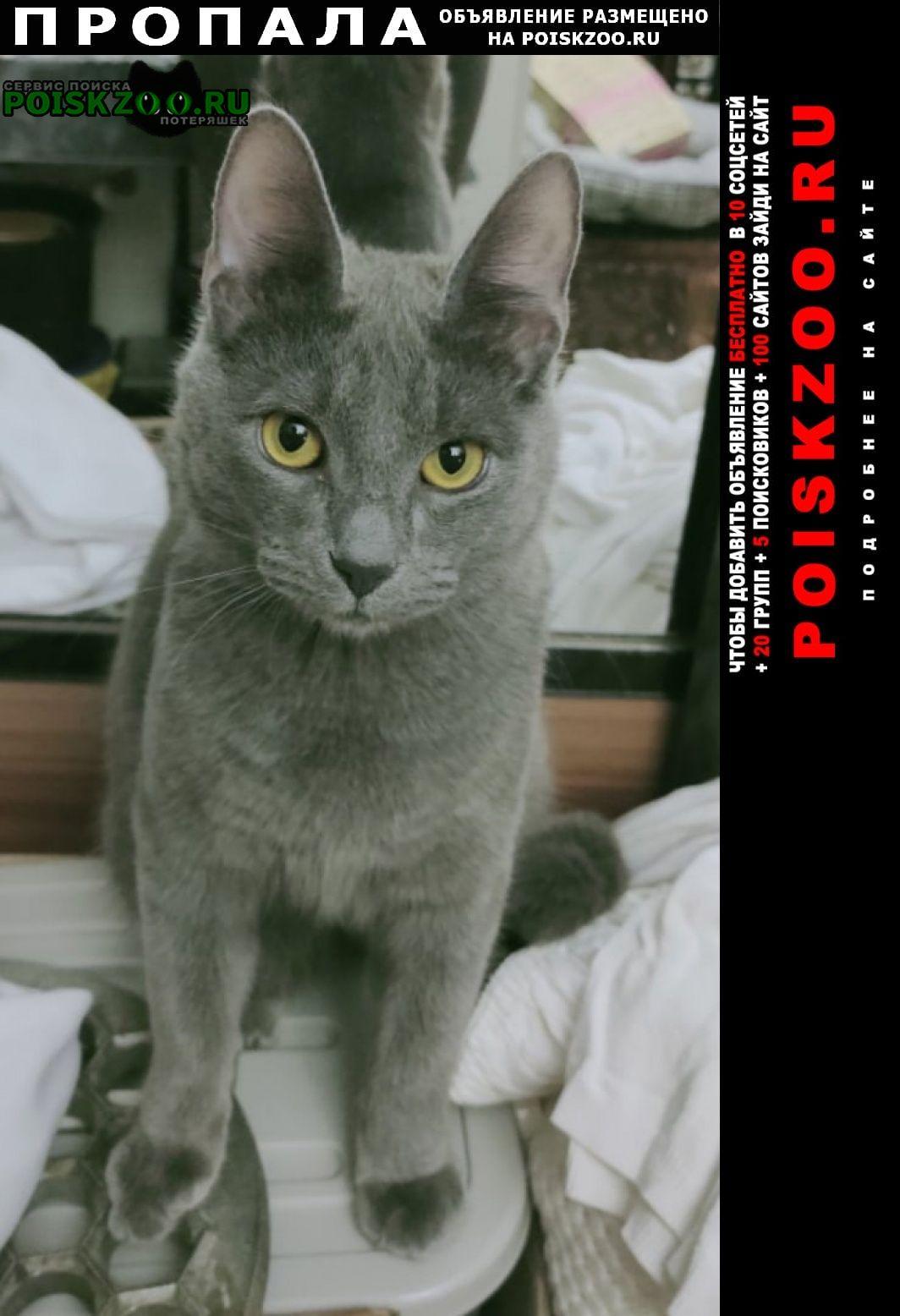 Пропал кот серый Москва