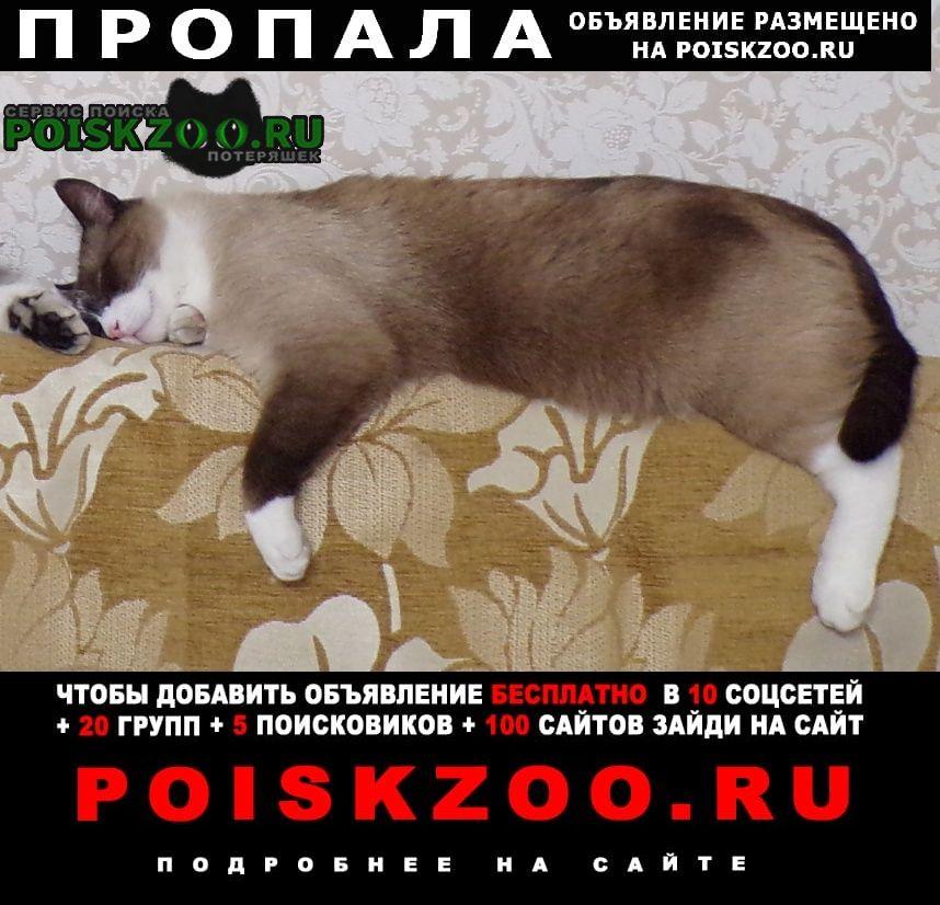 Пропал кот попова/гущина Барнаул