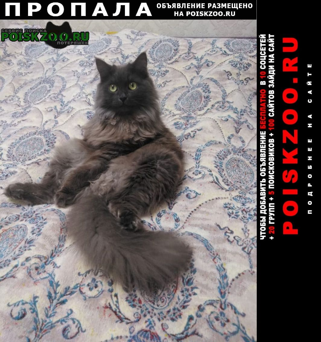 Пропал кот на столбах Красноярск