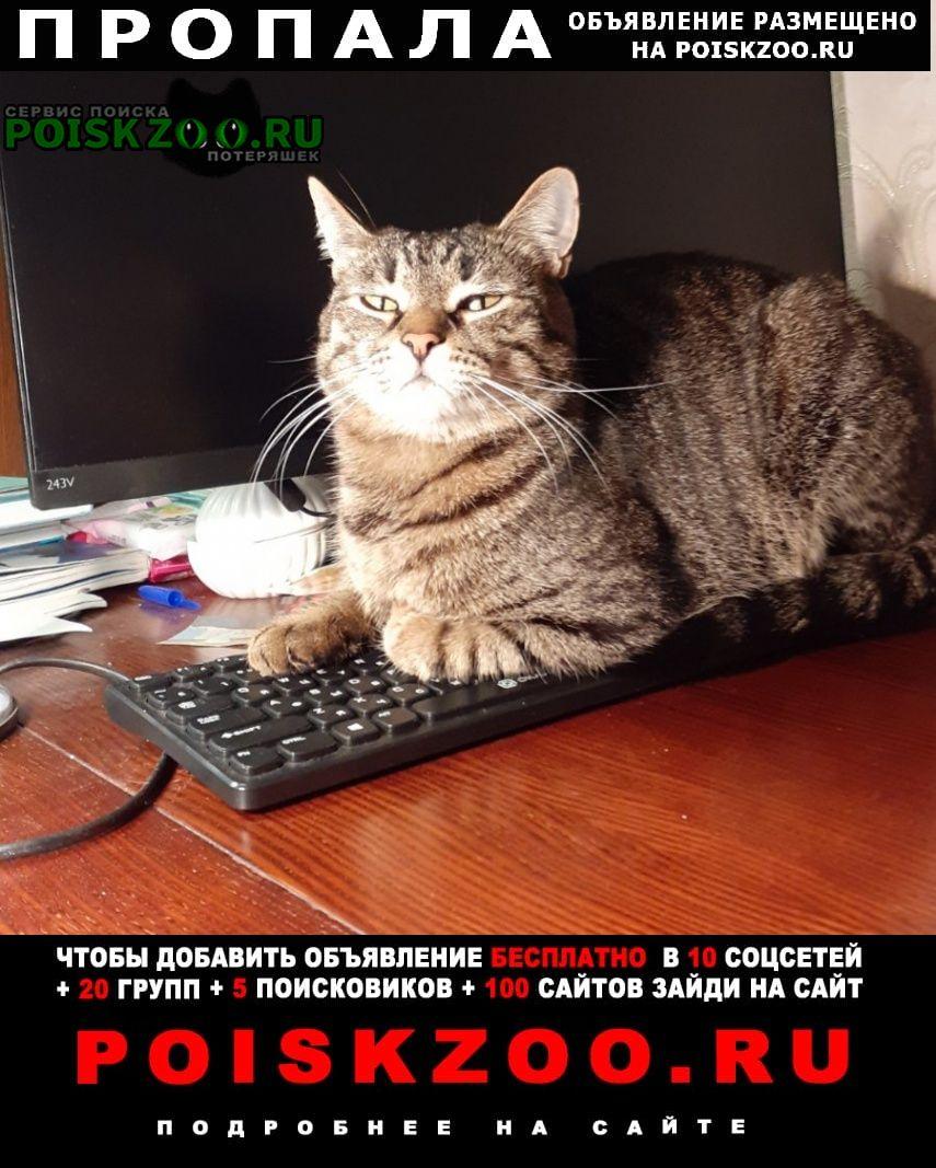 Пропал кот домашний Энгельс
