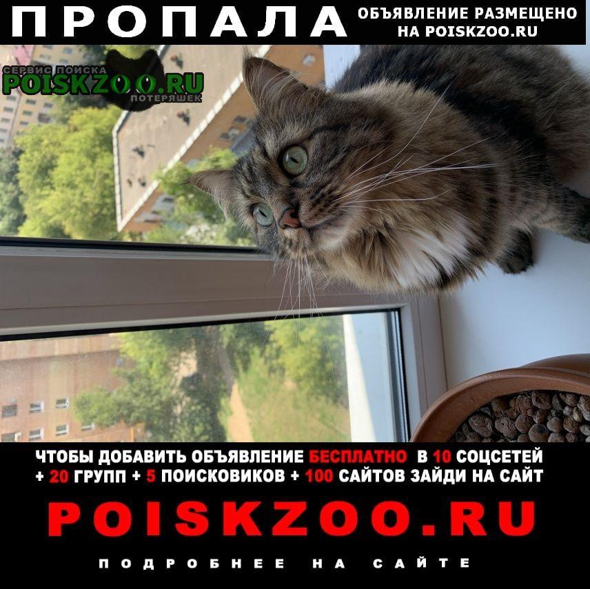 Пропал кот Подольск