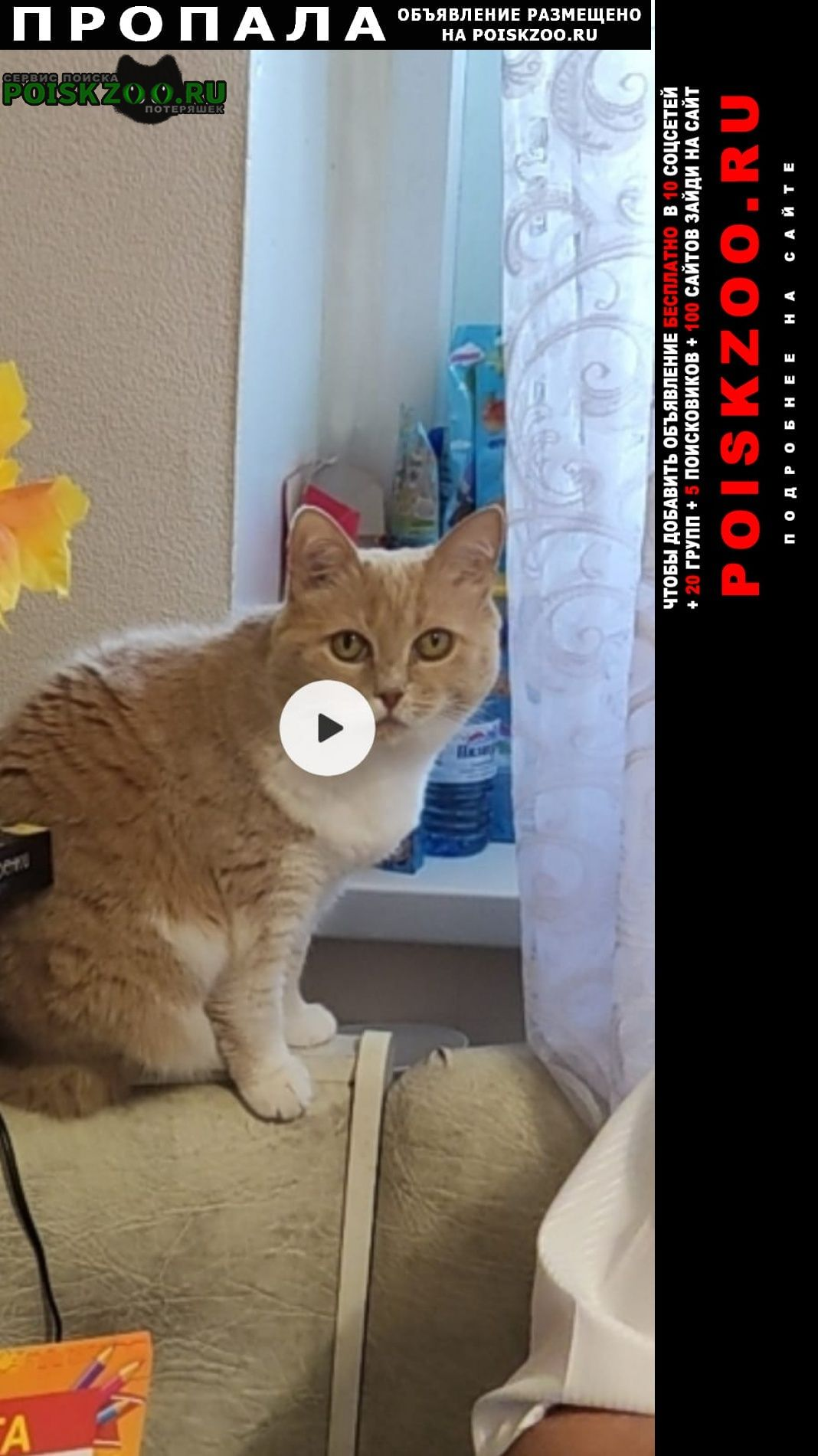 Пропала кошка маша Иваново