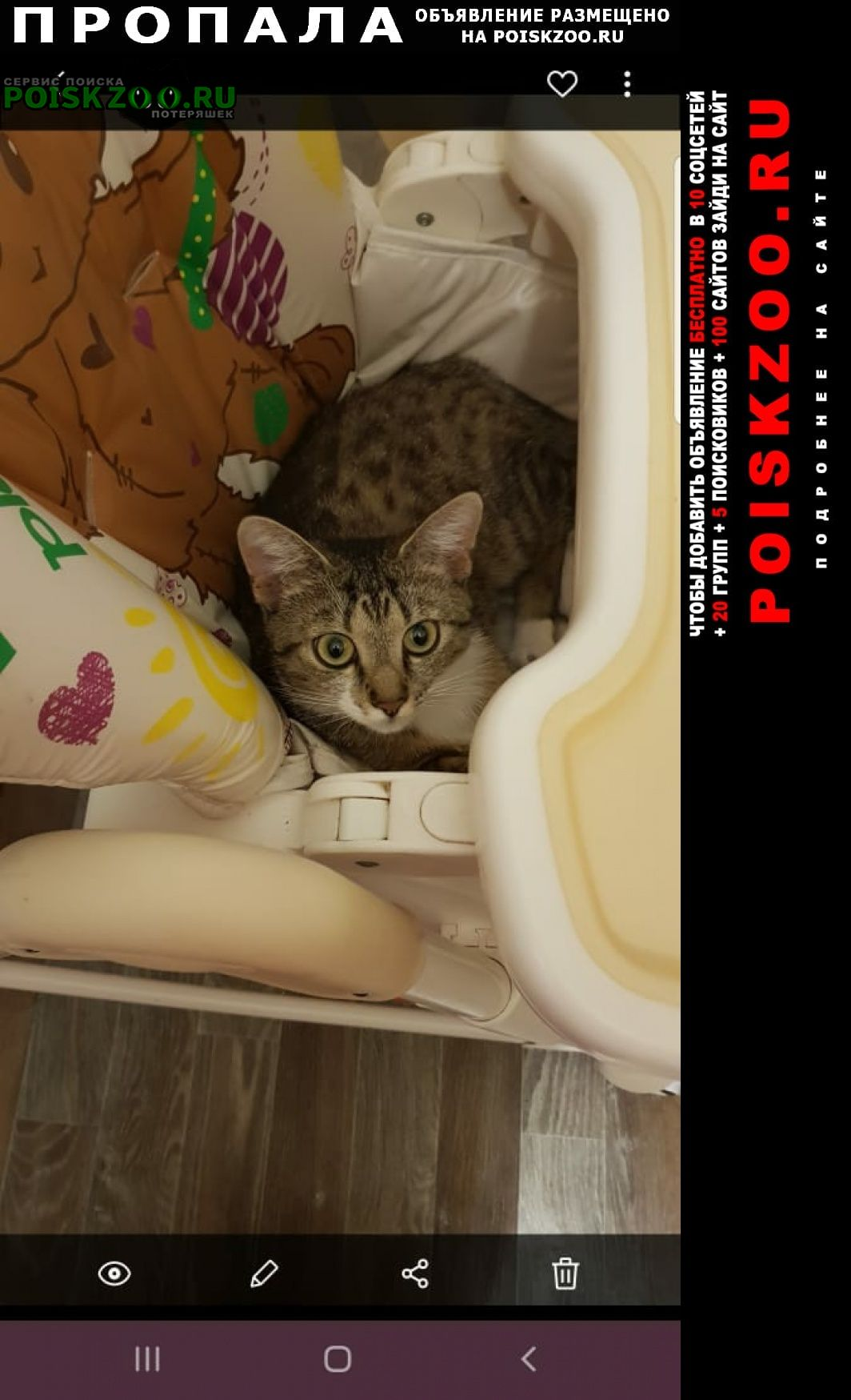 Пропала кошка Калининград (Кенигсберг)