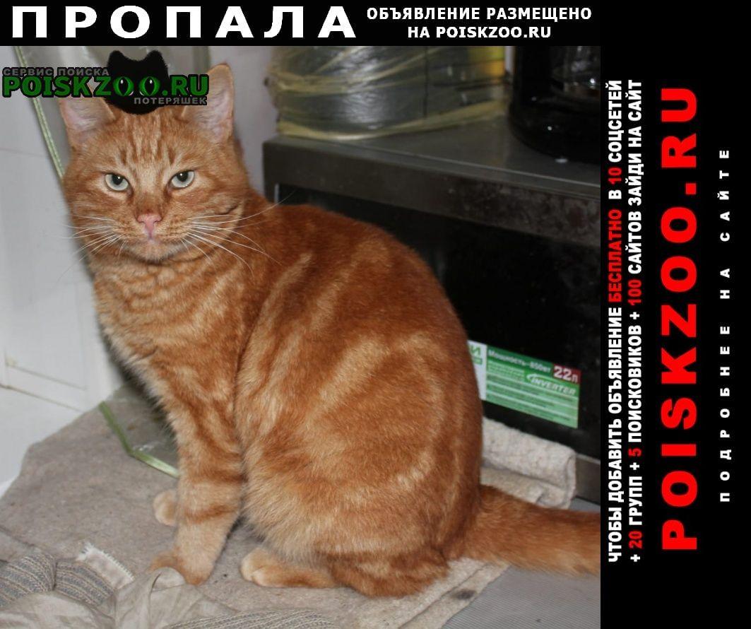 Пропала кошка внимание Таганрог