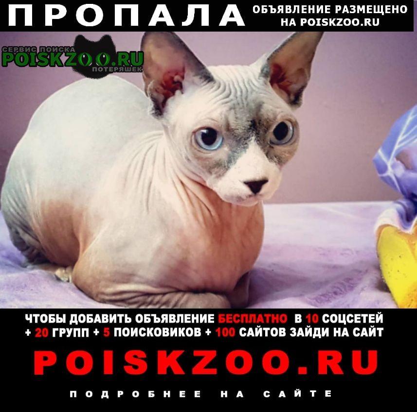 Пропала кошка сфинкс Барнаул