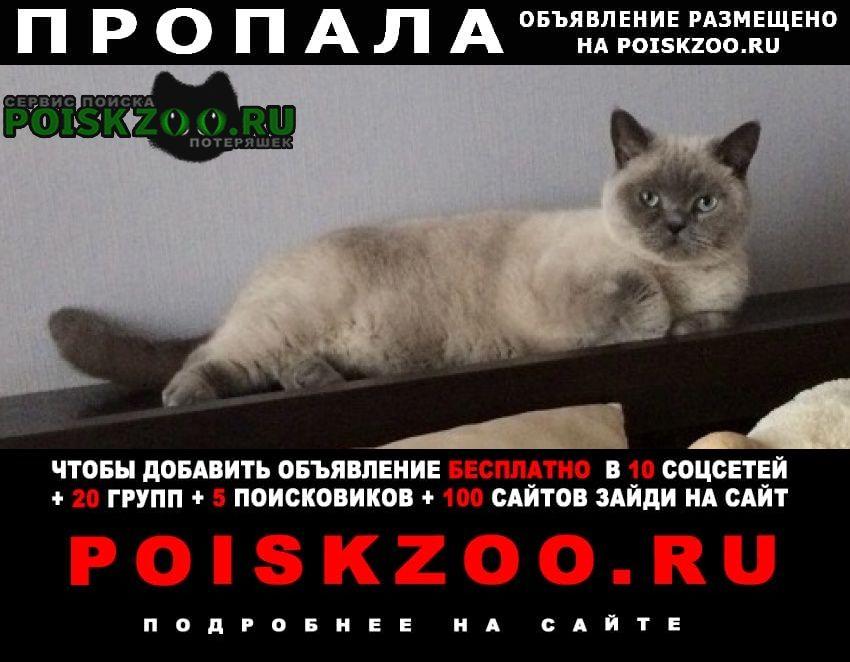 Пропал кот помогите Вологда